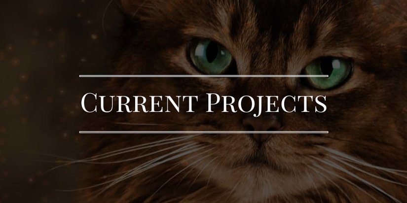 Canva Current Projects